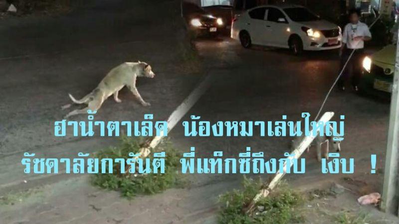 คลิปฮาน้ำตาเล็ด หมาตลก เล่นใหญ่ รัชดาลัยการันตี พี่แท็กซี่ถึงกับเงิบ
