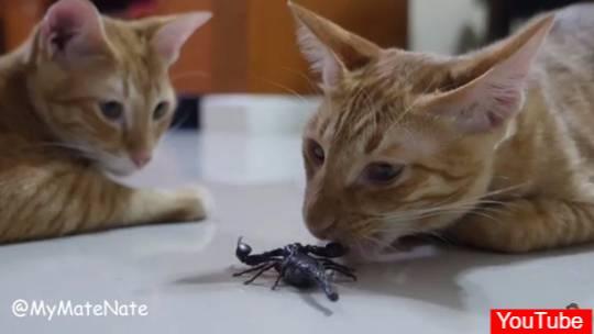my mate nate อัพคลิปแมวสู้กับแมงป่อง จนคนรักสัตว์ทนไม่ไหว