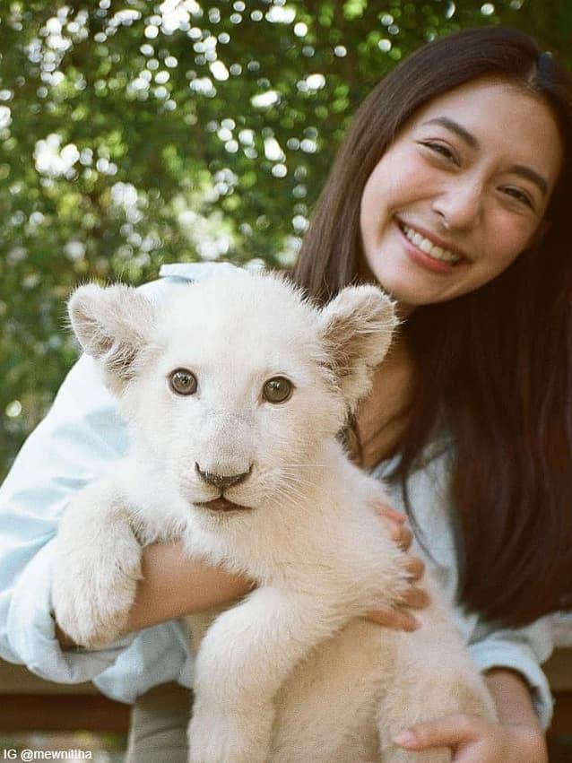 มิว นิษฐา กับสิงโตขาว ที่ สวนสัตว์โบนันซ่า เขาใหญ่